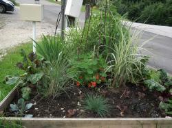 jardin 11 07 2012 n°3